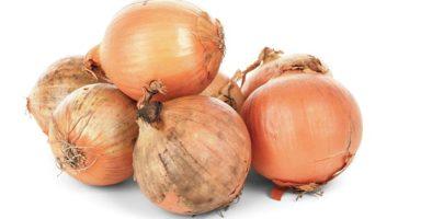 玉葱/タマネギのイメージ画像:食べ物辞典トップ用
