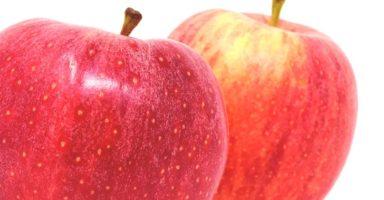 リンゴ/林檎のイメージ画像:食べ物辞典トップ用