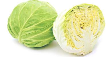 キャベツのイメージ画像:食べ物辞典トップ用
