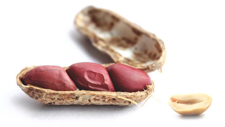 落花生/ピーナッツのイメージ画像:食べ物辞典トップ用(slowbeauty)