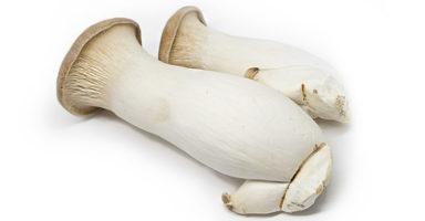 エリンギのイメージ画像:食べ物辞典トップ用