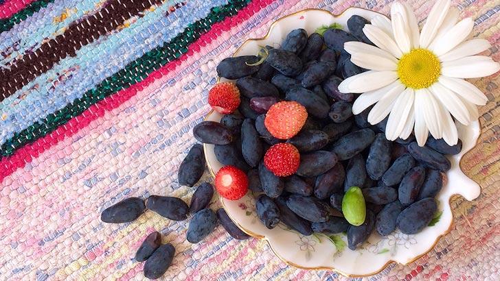 ハスカップのイメージ画像:食べ物辞典トップ用
