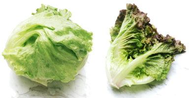 レタスのイメージ画像:食べ物辞典トップ用