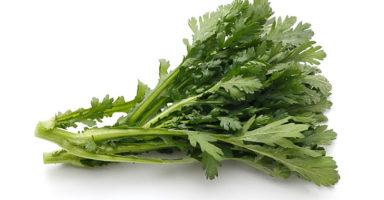 春菊/菊菜のイメージ画像:食べ物辞典トップ用