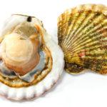 帆立貝/ホタテのイメージ画像:食べ物辞典トップ用