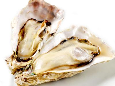 牡蠣(カキ)イメージ