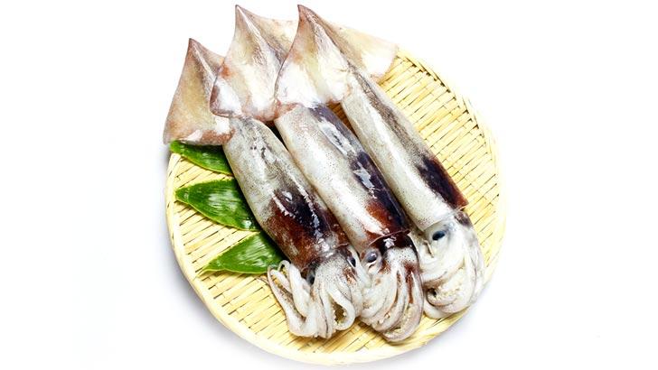 イカのイメージ画像