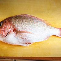 タイ(真鯛)イメージ