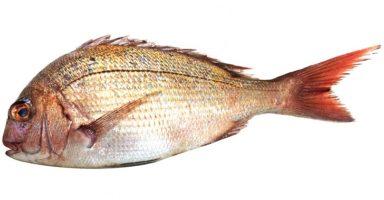 鯛(タイ/真鯛)のイメージ画像