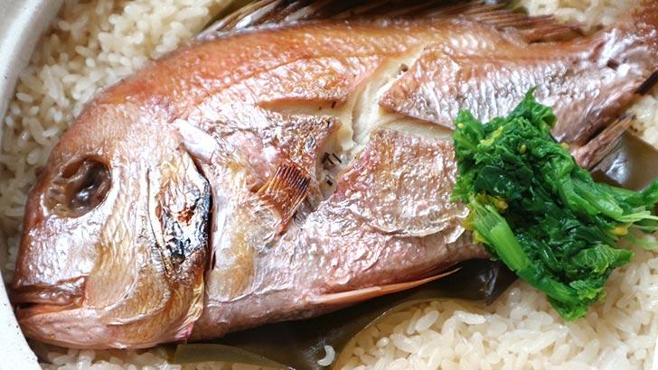 鯛(タイ/真鯛)のイメージ02
