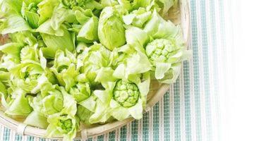 ふきのとう/蕗の薹のイメージ画像:食べ物辞典トップ用