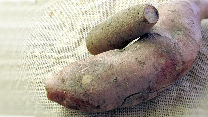 ヤーコンのイメージ画像:食べ物辞典トップ用