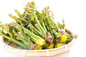 たらの芽(楤の芽)とその栄養成分・効果効能|苦みで春のデトックス? 強壮食材とも言われる理由は?