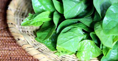 つるむらさき(蔓紫)のイメージ画像:食べ物辞典トップ用