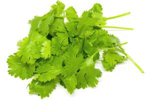 パクチー(香菜/シラントロ)のイメージ画像:食べ物辞典トップ用