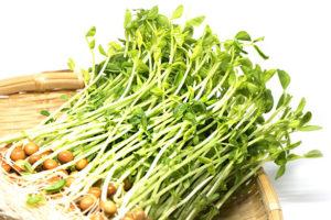 豆苗のイメージ画像:食べ物辞典トップ用