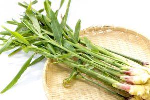 葉生姜のイメージ画像:食べ物辞典トップ用