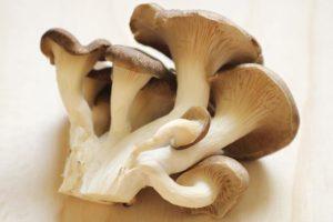 平茸のイメージ画像:食べ物辞典トップ用