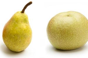 和梨と洋梨の違いの違い比較の記事トップ画像