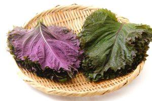 紫蘇と大葉の違いについて:比較の記事トップ用
