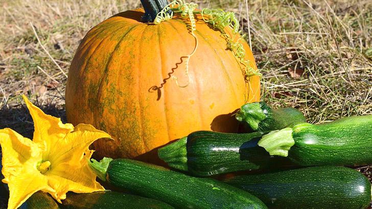 ズッキーニとかぼちゃのイメージ画像